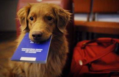 Pets can catch diseases travelling abroad