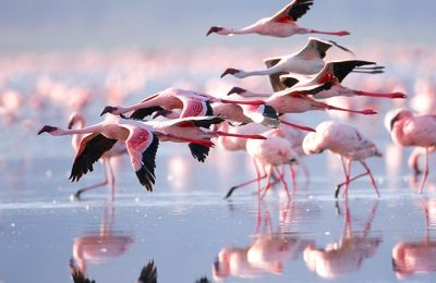 Flamingos arrive in Cyprus (Video)