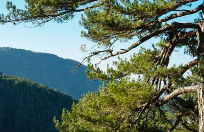 Renewed, bigger and better: Troodos International mountain race