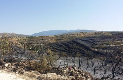 Police investigate possible arson in Monday's Limassol blaze, overnight alert, residents evacuated, vineyards destroyed