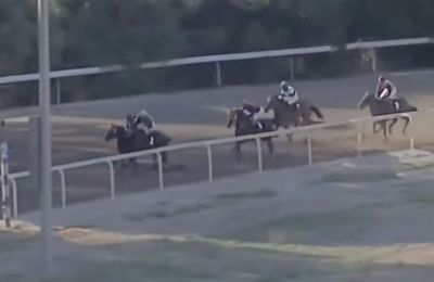 Police investigate work-related accident at Nicosia's race track where two horses were euthanized