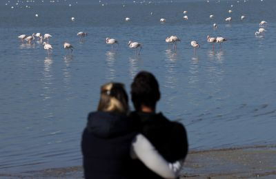Conservationists raise alarm over flamingo deaths in Cyprus as hunting debate continues